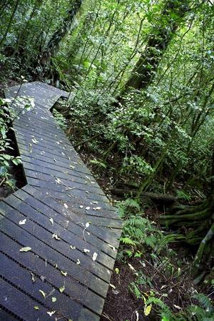 walking trail: Boardwalk sentiero nella foresta tropicale