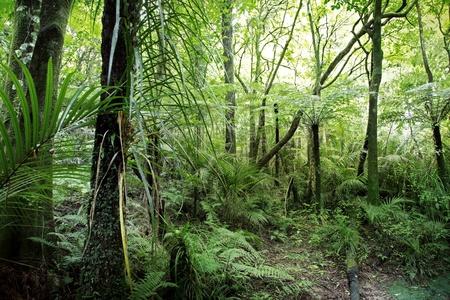 sfondo giungla: Fogliame lussureggiante giungla tropicale Archivio Fotografico