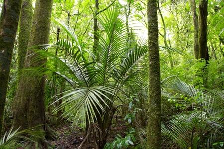 lush foliage: Lush foliage in tropical jungle