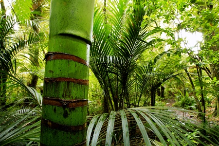 rain forest background: Lush foliage in tropical jungle