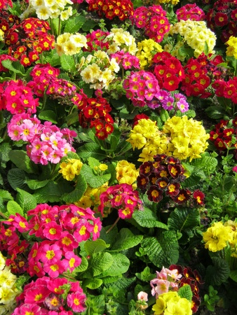 Closeup of colorful flower garden photo