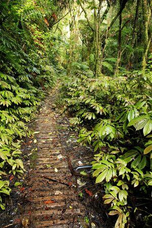 walking trail: Camminare sentiero nella foresta tropicale Archivio Fotografico