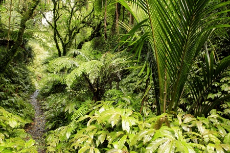 Lush foliage in tropical jungle photo