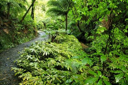 unspoilt: Forest