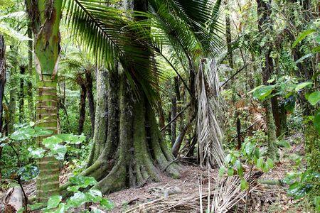 Lush foliage in tropical jungle photo
