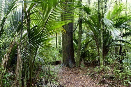 tropical rainforest: Walking trail in tropical forest Stock Photo