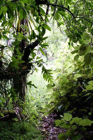 пышной листвой: Lush foliage in tropical forest