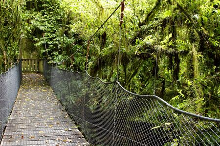unspoilt: Swing-bridge in tropical rain forest
