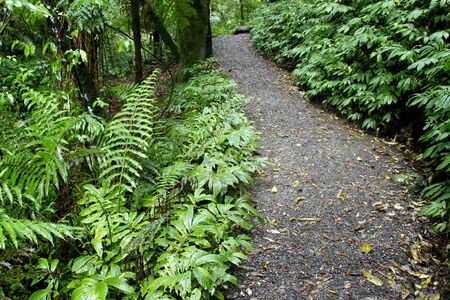 woodland scenery: Walking trail in tropical forest Stock Photo