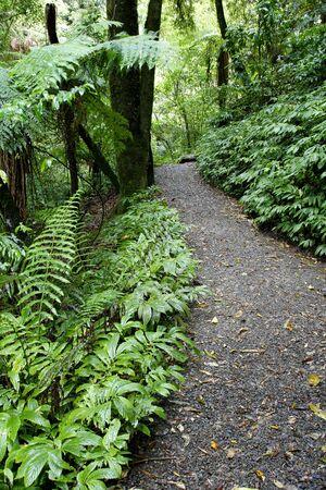 Camino de senderismo en el bosque tropical