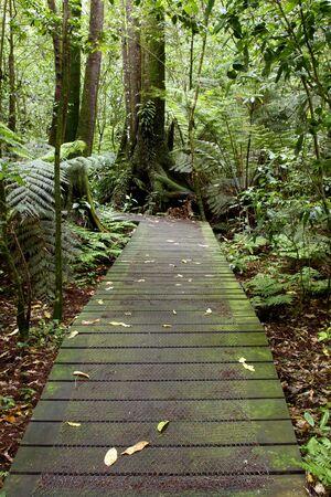 boardwalk trail: Boardwalk leading into tropical forest