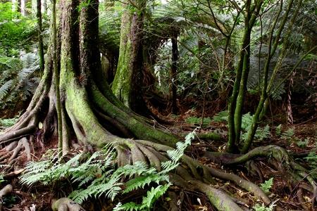 racines: Racines de tronc d'arbre dans la jungle tropicale Banque d'images