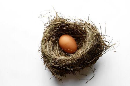 nestegg: Egg in nest on plain background