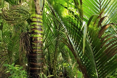 unspoilt: Lush foliage in tropical jungle