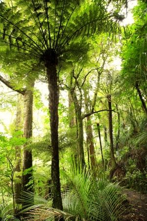 La exuberante vegetación de la selva tropical