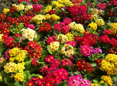 lots of: Closeup of colorful flower garden