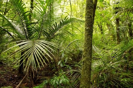 dense forest: Lush foliage in tropical jungle
