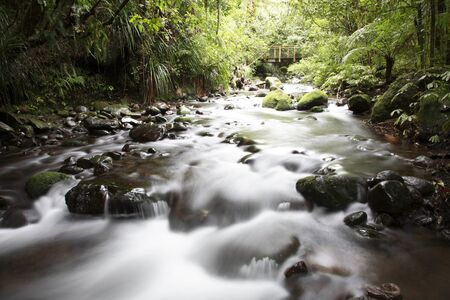 Stream flowing in lush tropical forest photo