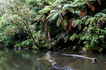 unspoilt: River flowing in tropical forest