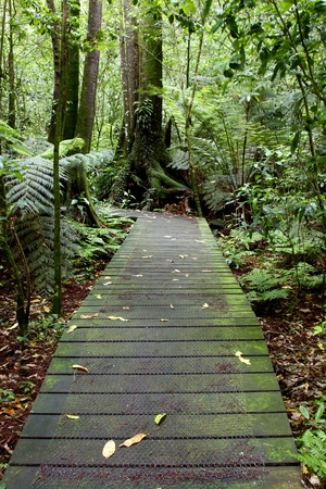 Boardwalk in forest photo