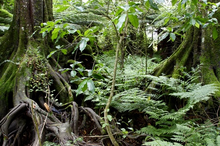 Lush foliage in tropical jungle Stock Photo - 11915596