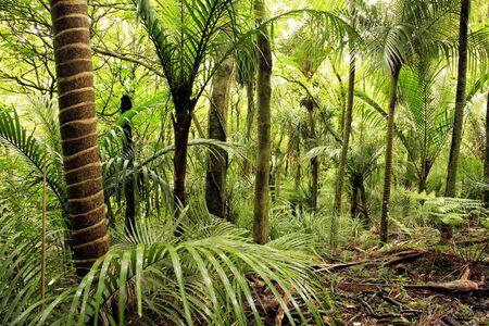 пышной листвой: Lush foliage in tropical jungle