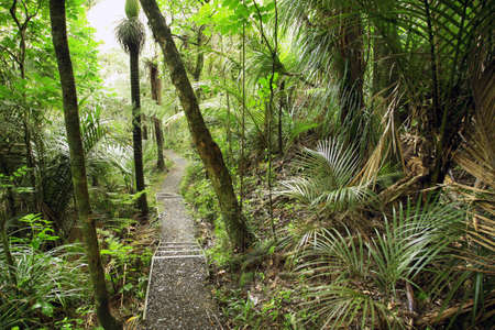 woodland scenery: Hiking trail in tropical jungle