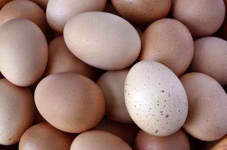 Closeup of eggs Stock Photo - 12876276