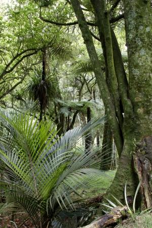 jungle scene: Lush foliage in rain forest