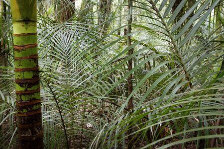 пышной листвой: Пышной листвой в тропических лесах Фото со стока
