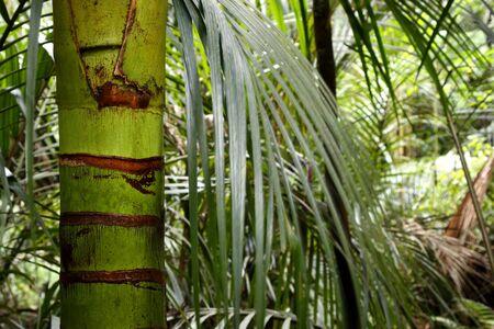 Lush foliage in rain forest Stock Photo - 13822066