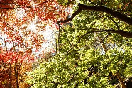 changing color: Hojas de cambio de color en el oto�o de los bosques Foto de archivo