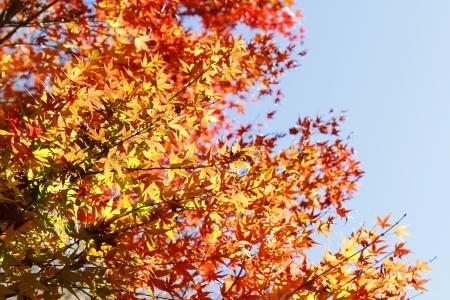 changing color: Hojas de cambio de color en oto�o