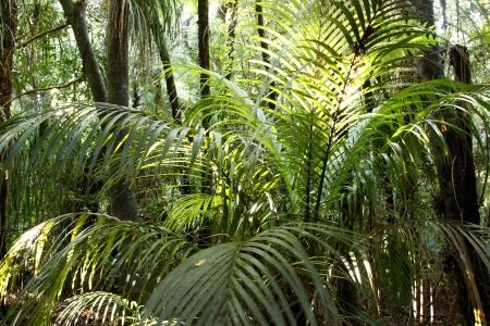 beautiful woodland: Lush foliage in tropical jungle