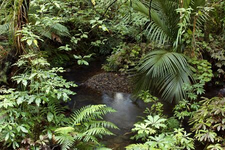 A stream flows gently inside lush tropical jungle photo