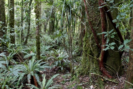 jungle scene: Lush foliage in tropical jungle