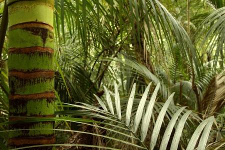 jungle scene: Lush green foliage in tropical jungle
