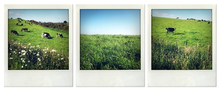 Rural scenes, North Island, New Zealand Stock Photo - 16261339