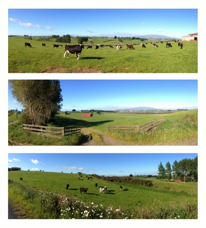 dairy farm: Rural scenes, North Island, New Zealand