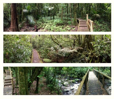 jungle scene: Four assorted views of rain forest