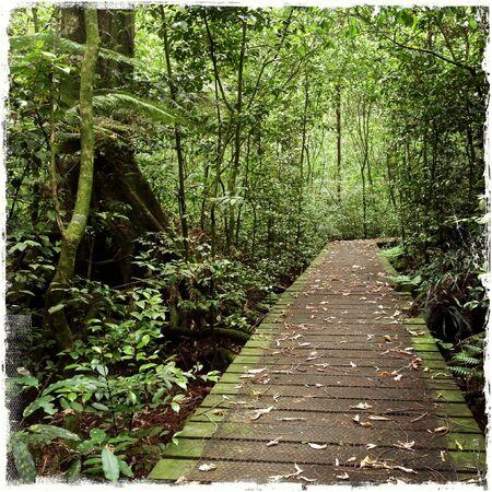 jungle scene: Lush green tropical rain forest Stock Photo