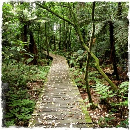 Lush green tropical rain forest