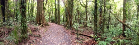 wilds: Panoramic view of trail in forest Stock Photo