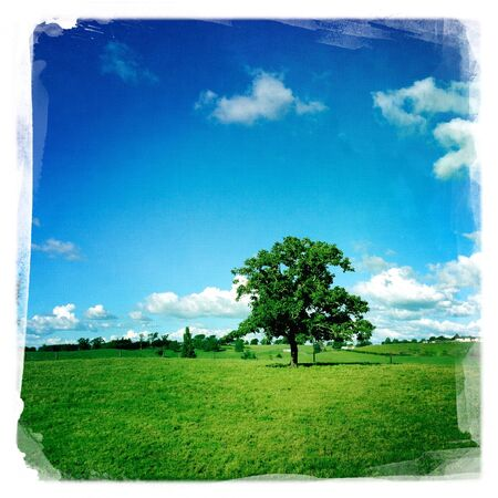 Large tree in grass field photo