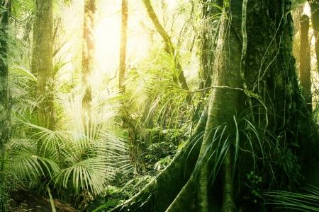 jungle scene: Morning sunlight in tropical jungle Stock Photo
