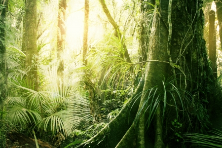 Por la ma�ana la luz del sol en la selva tropical photo