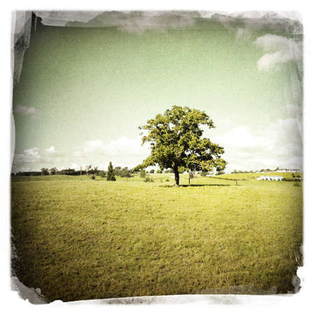 Large tree alone in field  photo