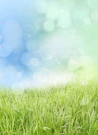 Grass and sky spring background photo