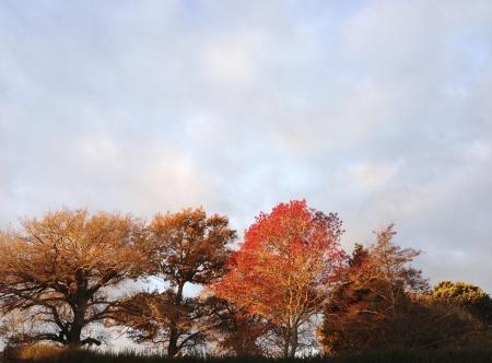 changing color: Hojas cambian de color en los �rboles en oto�o Foto de archivo