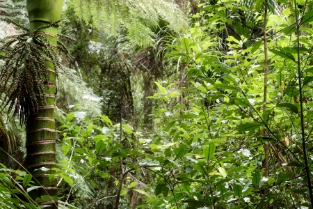 undergrowth: Tropical jungle forest Stock Photo